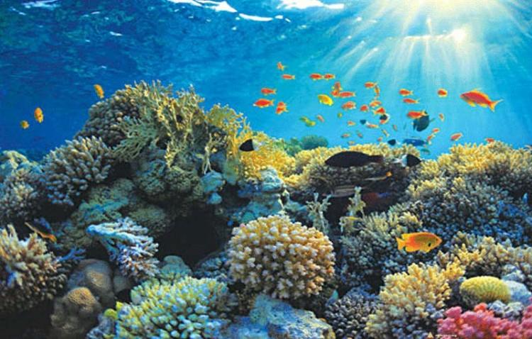 Pobliskie wody są idealne do nurkowania